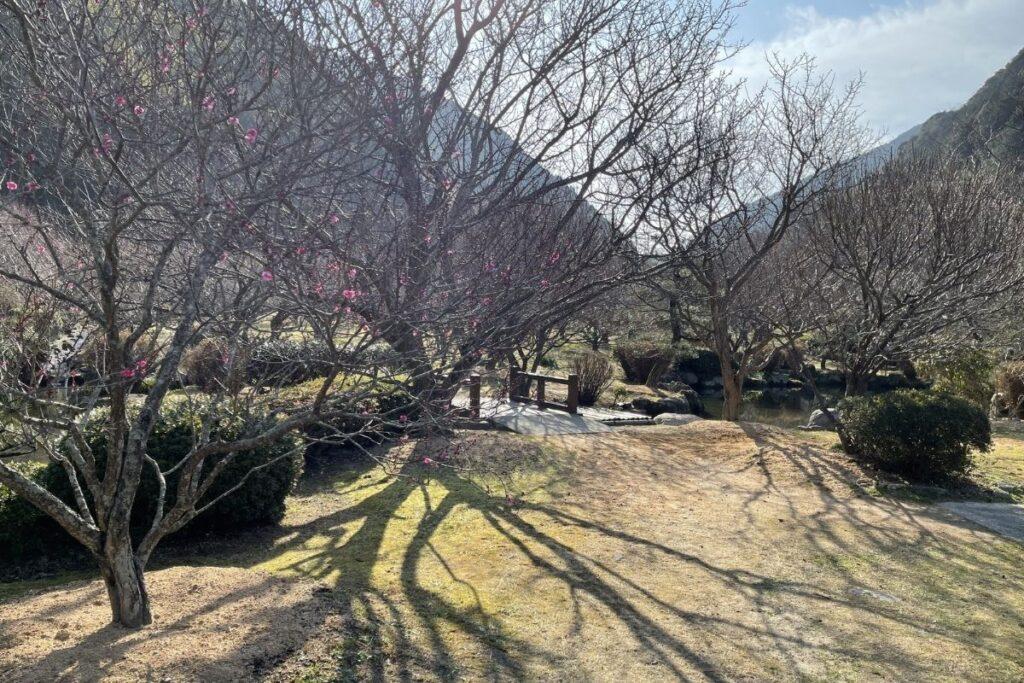 萩往還梅林園1