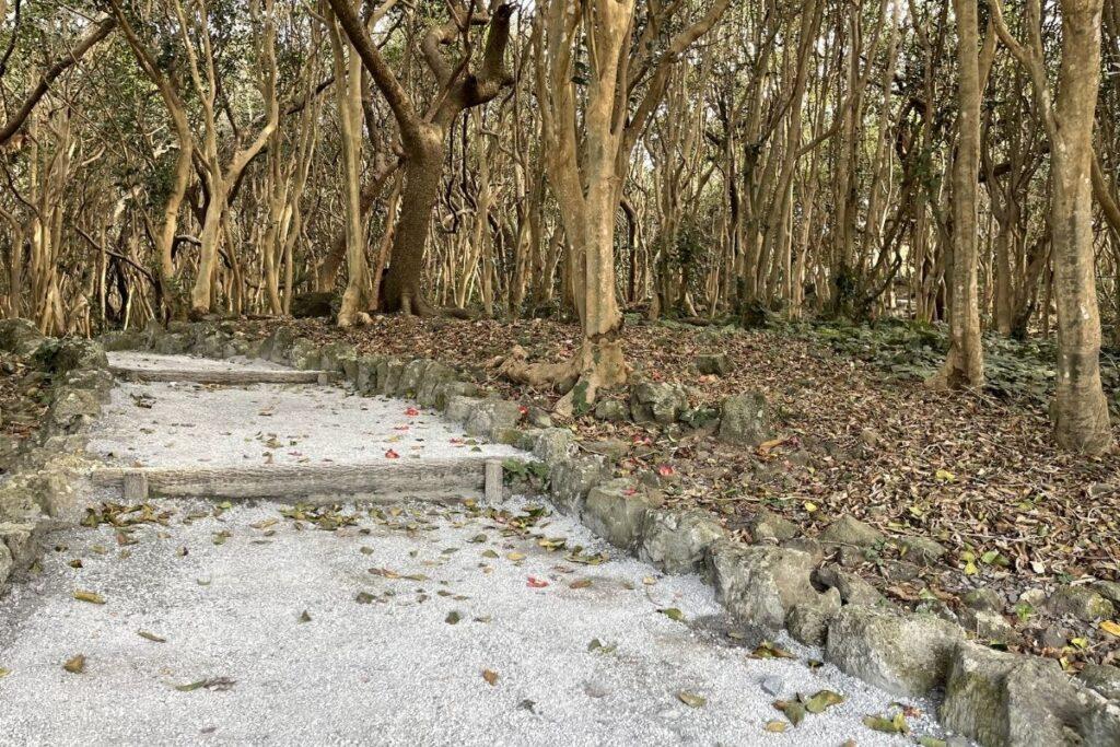 笠山椿群生林1