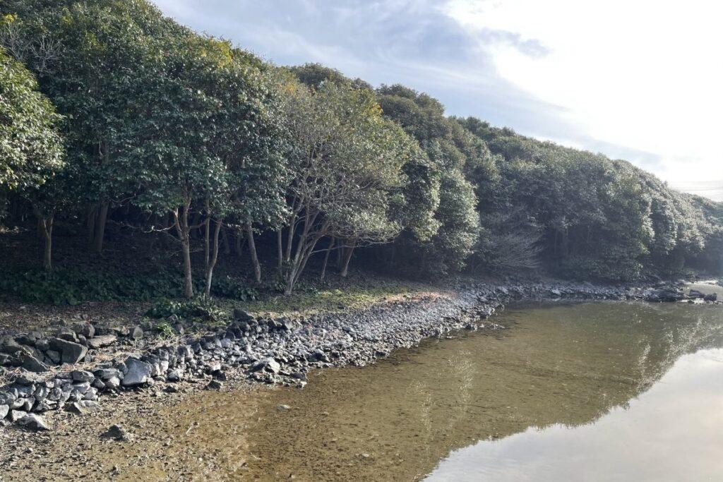 笠山椿群生林2